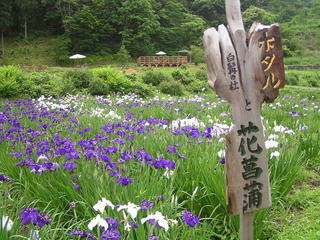 100703_1212_白髭神社前の花菖蒲園(長野市)