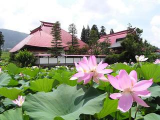 100725_1107_稲泉寺のハス(木島平村)