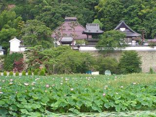 100731_1004_大雲寺のハス(千曲市)