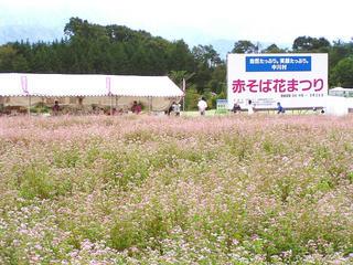 100918_1435_赤そば花まつり(中川村)