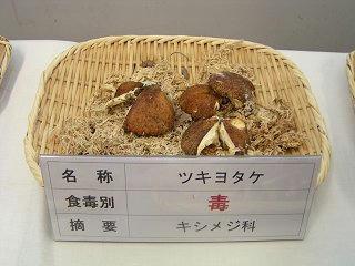 101002_1105_長野まるごと秋祭り・ツキヨタケ(長野市)
