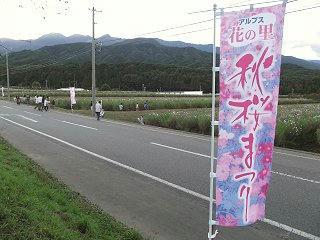 101010_1634_信州最大級200万本の秋桜・「秋桜まつり」(飯島町)