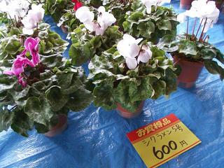 101114_1013_長野県農業大学・農大祭2010(長野市)