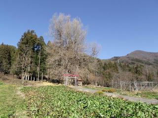 101205_1333_神戸のイチョウ(飯山市)