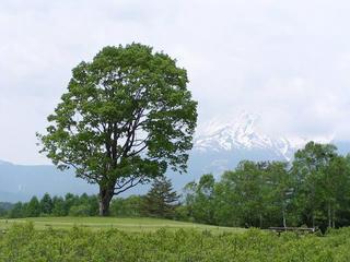 080607_1049_開田高原のコナラ(木曽町)