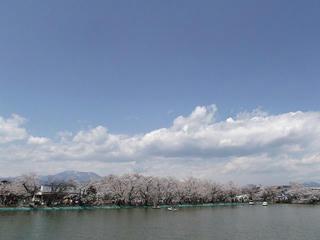 110424_1143_臥竜公園のサクラ(須坂市)