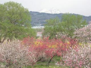 110430_0840_千曲川ふれあい公園(小布施町)