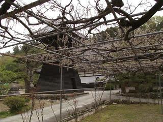 110503_1023_泉龍院の三色藤(豊丘村)