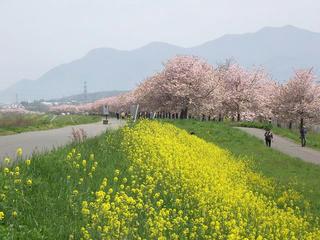110508_0933_千曲川ふれあい公園(小布施町)