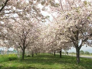 110508_0931_千曲川ふれあい公園(小布施町)