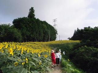 110816_0715_平石農場のひまわり(阿南町)