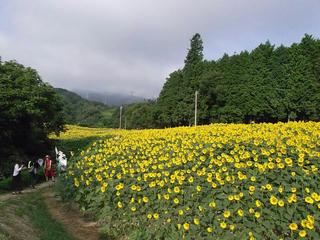 110816_0719_平石農場のひまわり(阿南町)