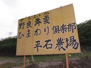 110816_0725_平石農場のひまわり(阿南町)