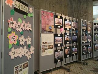 110816_1523_杵原学校 桜フォトコンテスト入賞作品展(飯田市)