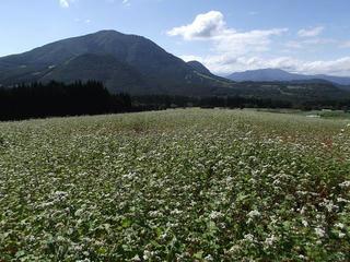 110924_1343_第8回法印さんとそばの花まつり(山ノ内町)