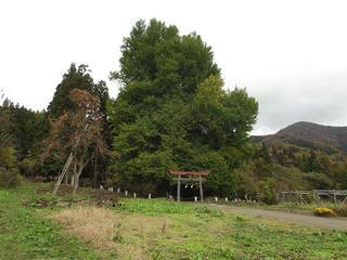 111113_1234_神戸のイチョウ(飯山市)