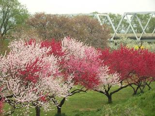 120430_0802_千曲川ふれあい公園(小布施町)