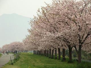 120430_0816_千曲川ふれあい公園(小布施町)