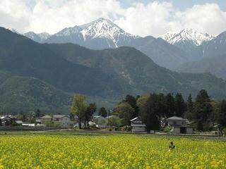 120505_1258_常念岳と菜の花畑(安曇野市)