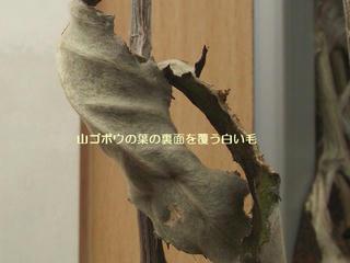 121111_1130_富倉新そば祭り(飯山市)