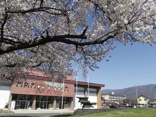130413_1407_塩尻市役所周辺の桜並木(塩尻市)