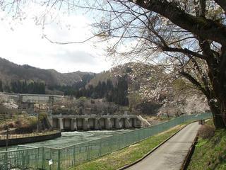 130428_1118_東京電力西大滝ダムの桜並木(飯山市)