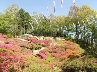 130503_0912_台城公園のつつじ(松川町)