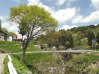 130512_1112_とみくら山菜まつり(飯山市)