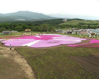 130602_1153_黒姫高原・信州芝桜園(信濃町)