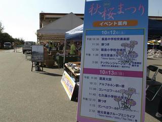131012_0930_信州アルプス花の里いいじま2013秋桜まつり(飯島町)