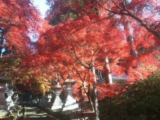 131124_0845_清水寺の紅葉(長野市)
