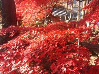 131124_0847_清水寺の紅葉(長野市)