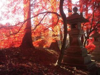 131124_0850_清水寺の紅葉(長野市)