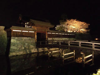 140416_2008_松代城跡の夜桜(長野市松代町)