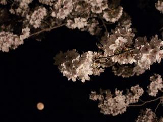 140416_2023_松代城跡の夜桜(長野市松代町)