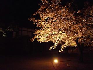 140416_2010_松代城跡の夜桜(長野市松代町)
