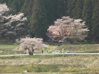 140426_1223_黒川「桜林の大桜」(飯綱町)
