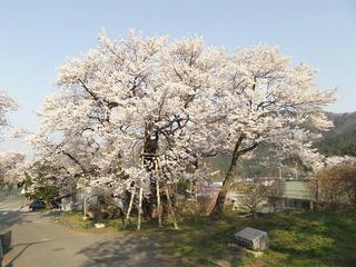 140427_0725_延命地蔵堂の桜(須坂市)