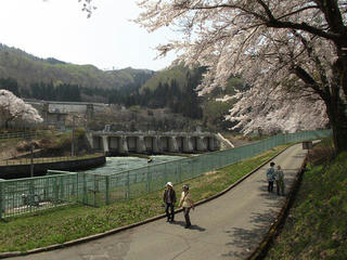 140427_1051_東京電力西大滝ダムのサクラ(飯山市)