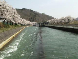 140427_1052_東京電力西大滝ダムのサクラ(飯山市)