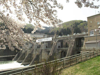140427_1057_東京電力西大滝ダムのサクラ(飯山市)