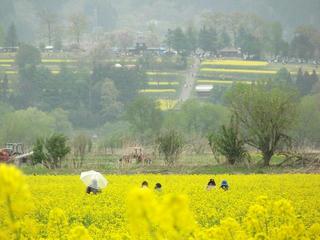 140505_1238_第31回いいやま菜の花まつり(飯山市)