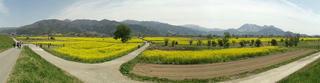 140506_1213_飯山市常盤の菜の花畑(飯山市)