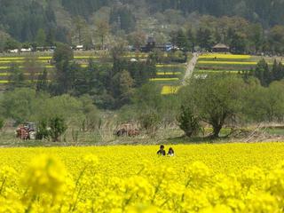 140506_1210_飯山市常盤の菜の花畑(飯山市)