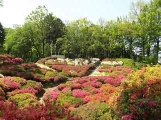 140510_1257_台城公園のつつじ(松川町)