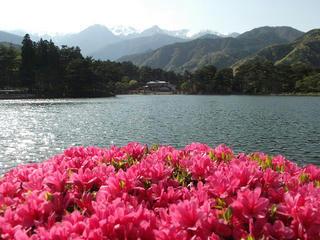 140510_1532_千人塚公園・城ヶ池池畔に咲くつつじ(飯島町)