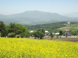 140601_1139_黒姫高原・信州芝桜園(信濃町)