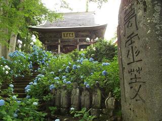 140705_1757_あじさい寺・高源院(飯山市)