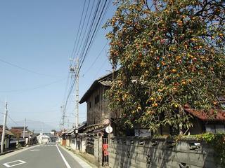 141011_1159_山寺常山邸近くの民家の庭に実る柿(長野市松代町)