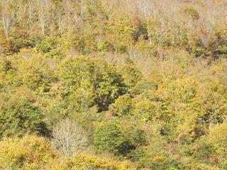 141018_1415_県道上越飯山線(関田峠)